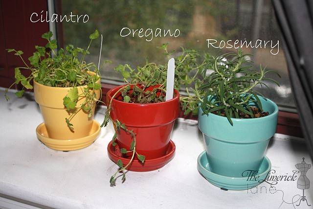 Indoor Herb Garden 2